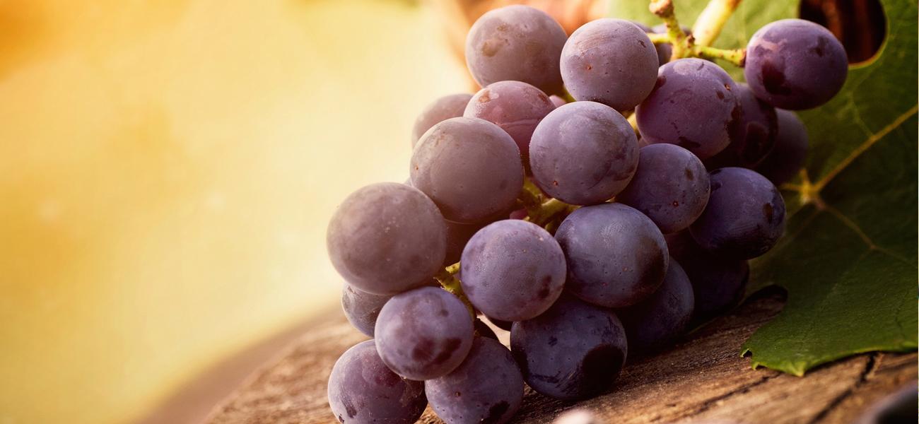 Vinske sorte vinove loze!